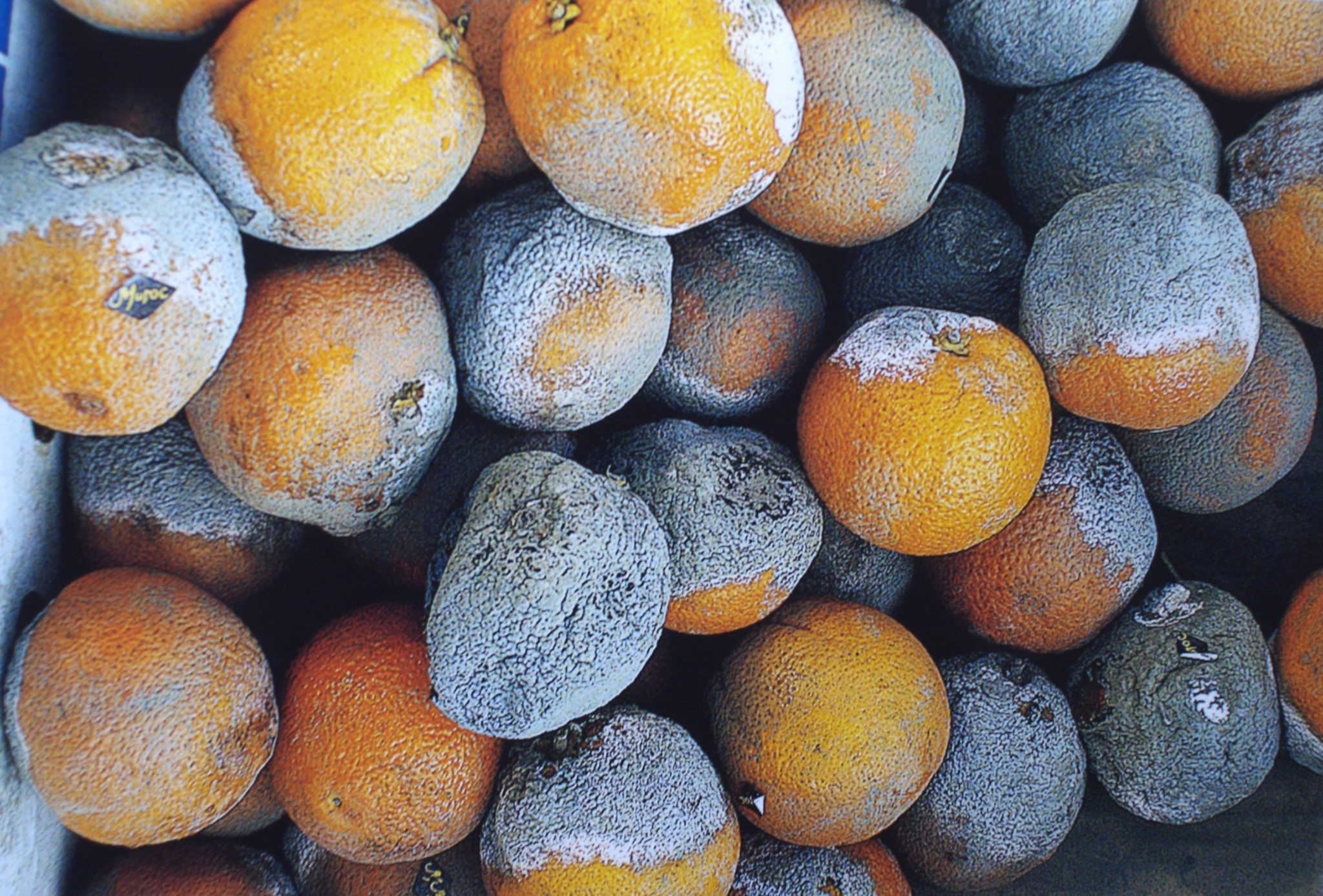 anti-orange campaign imagery - mouldy oranges